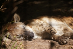felin-dormant