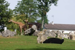 girafe-autruche