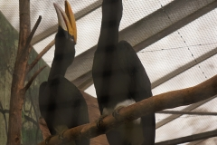 Oiseau-bruillant-beauval