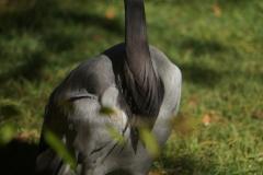 oiseau-beauval