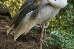 oiseau-sur-patte