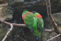 oiseau-vert-beauval
